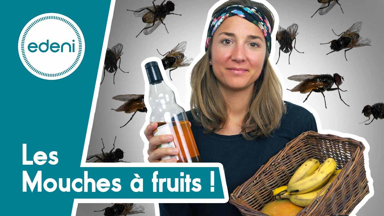astuce zerowaste pour se d barrasser des mouches fruits. Black Bedroom Furniture Sets. Home Design Ideas