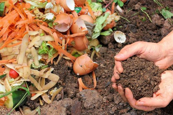 compost humus