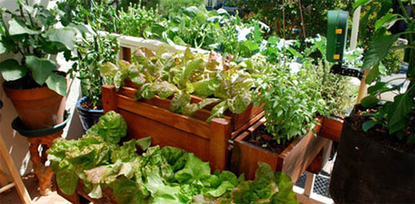 compost plante