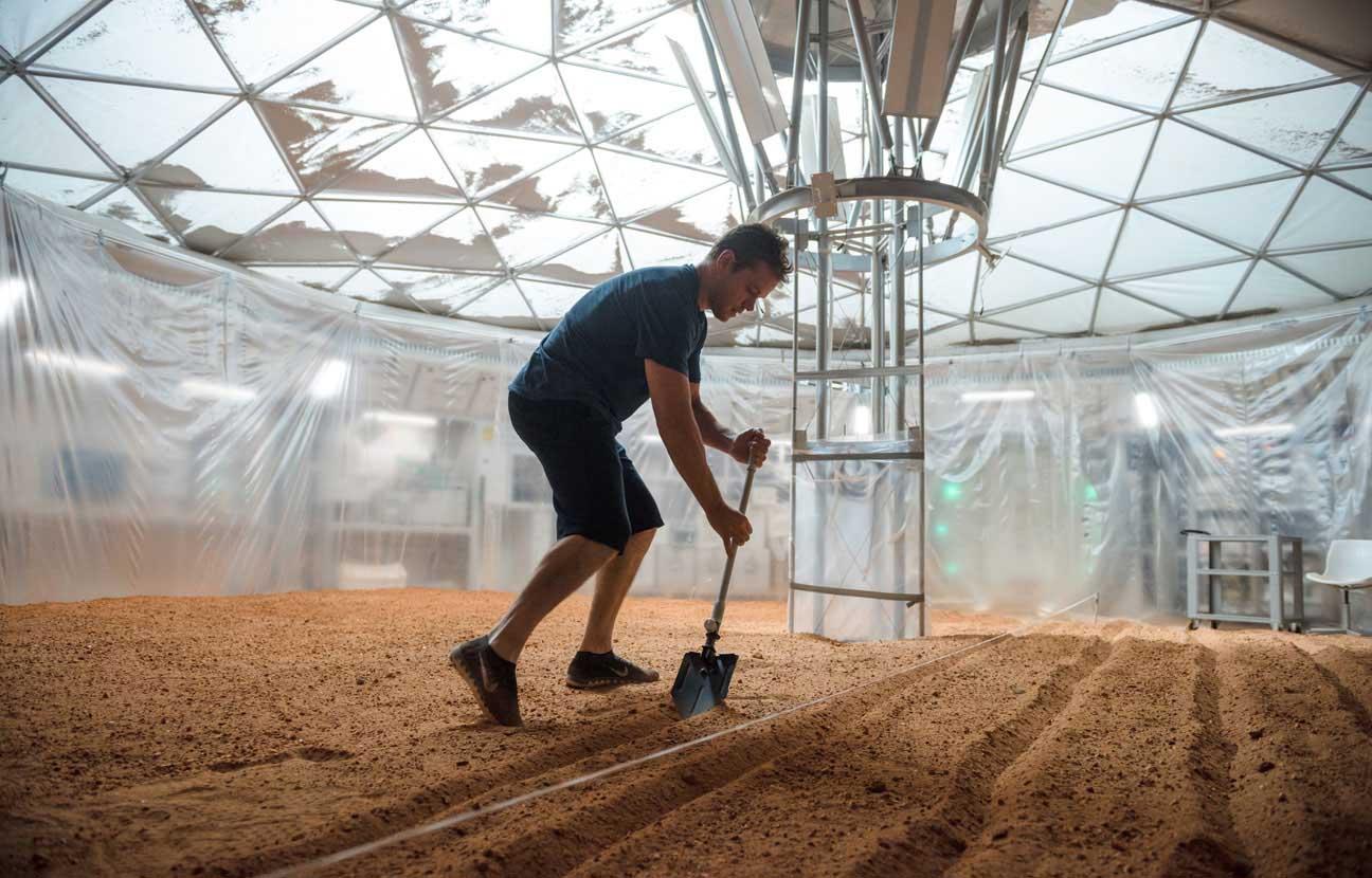 Comment j'ai accidentellement fait pousser des pommes de terre dans mon 26 m² à Paris ?